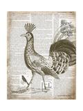 Vintage Bird II