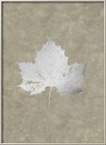 Silver Foil Leaf II on Lichen Wash