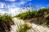 To the Beach II