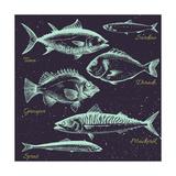 Vector Set of Sea Fish Menu  Shrimp  Fish  Dorado  Mackerel  Sprats  Sardines Retro Graphic Line Dr