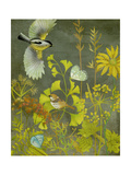 Birding II