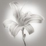 Tiger Lily I