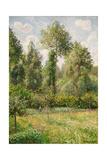 Poplars  Eragny
