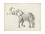 Elephant Sketch I