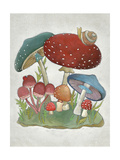 Mushroom Collection I