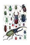 Insects  Beetles and Scarab  Vintage Engraved Illustration La Vie Dans La Nature  1890