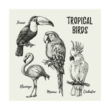 Hand Drawn Sketch Black and White Vintage Exotic Tropical Birds Set Vector Illustration Isolated O