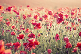 Beautiful Landscape Image of Summer Poppy Field with Cross Processed Retro Effect with Differential