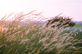 Field of Grass during Sunset for Background