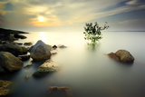 A Lone Tree Partially Submerged in the Water during Sunset  Long Exposure  Image Contain Certain