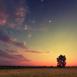 Vintage Picture Sunset with Moon and Clouds Sky in a Wheat Field with Lonely Tree