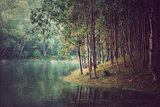 Forest Background  Vintage Style