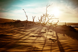 Desert Landscape with Dead Plants in Sand Dunes under Sunny Sky Global Warming Concept Nature Bac