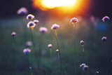 Many Beautiful Meadow Wild Flowers in Field on Sunset Background Sunny Outdoor Bright Evening Colo