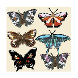 Collection of Vector Colorful Realistic Butterflies for Design