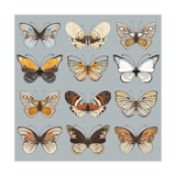 Retro Collection Vector Butterflies