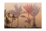 Colorful Background with Silhouette of Palm Trees on the Beach Tropical Seasonal Background for To