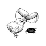 Vector Vintage Hand Drawn Chicken Baby and Egg Shell Engraved Illustration Rural Natural Bird Far