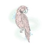 Gentle Parrot Vector Trendy Shades
