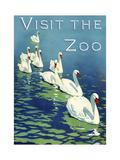 The Zoo 002