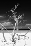 Cuba Fuerte Collection B&W - Trees and White Sand VI