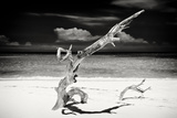 Cuba Fuerte Collection B&W - Trees and White Sand VII