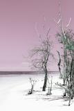 Cuba Fuerte Collection - Pale Violet Summer