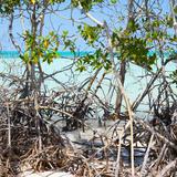 Cuba Fuerte Collection SQ - Mangroves
