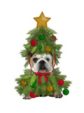 English Bulldog, Christmas Tree Costume Reproduction d'art par Fab Funky