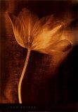 Bronze Tulip II