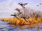 Ducks Unlimited As Good As Home