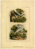 Exotic Birds IV
