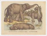 Animaux d'Afrique  Elephant