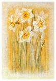 Narcisses I