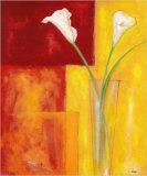 Callas Auf Warmen Rot