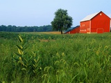 Red Barn in Green Field