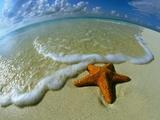 Starfish on Edge of Shore Papier Photo