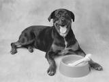Dog Lying by Bowl