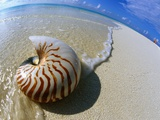 Seashell Resting on Shore Papier Photo par Leslie Richard Jacobs