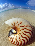 Seashell Sitting in Shallow Water