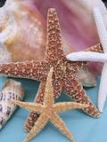 Dried Sea Stars Leaning on Shell Papier Photo par Robert Marien