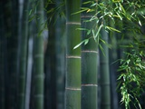 Green Bamboo