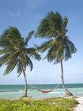 Hammock Attached to Palm Trees at Ocean