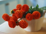 Red Chrysanthemums