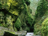 Moss Coating Oneonta Gorge