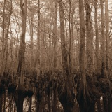 Trees in Swamp Garden