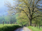 Cades Cove Lane in Great Smoky Mountains National Park
