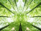 Trees in Forest Ascending