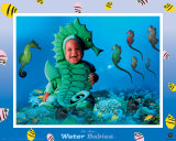 Water Babies Seahorse