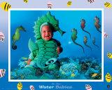 Water Babies  Seahorse